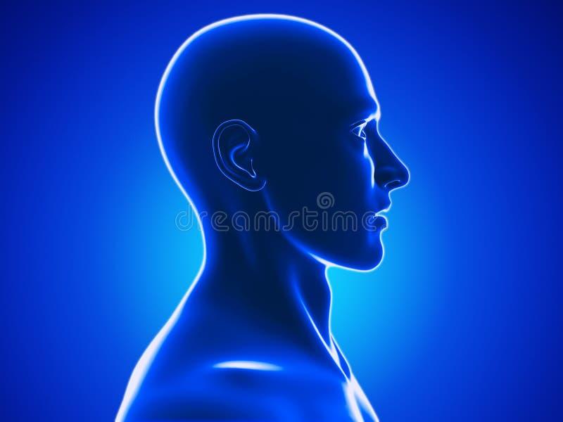 Ludzka głowa ilustracja wektor