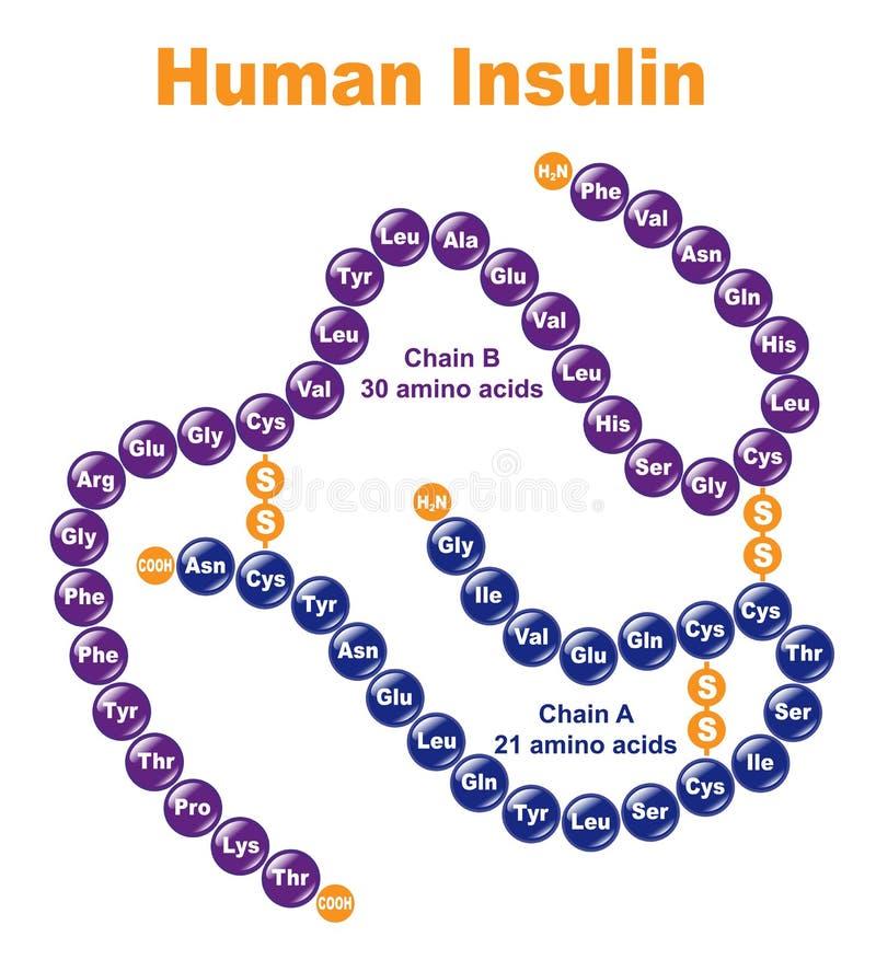 ludzka insulina ilustracji