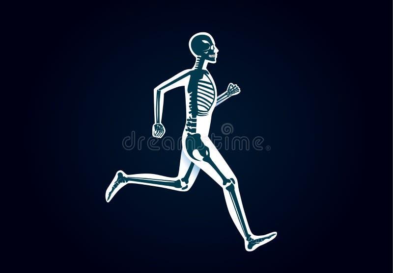 Ludzka kości anatomia podczas gdy biegający ilustracja wektor