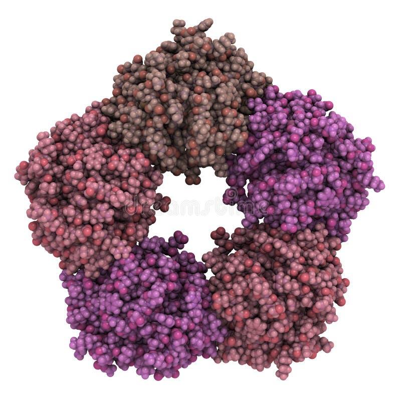 Ludzka Odczynnikowa proteina (CRP) royalty ilustracja