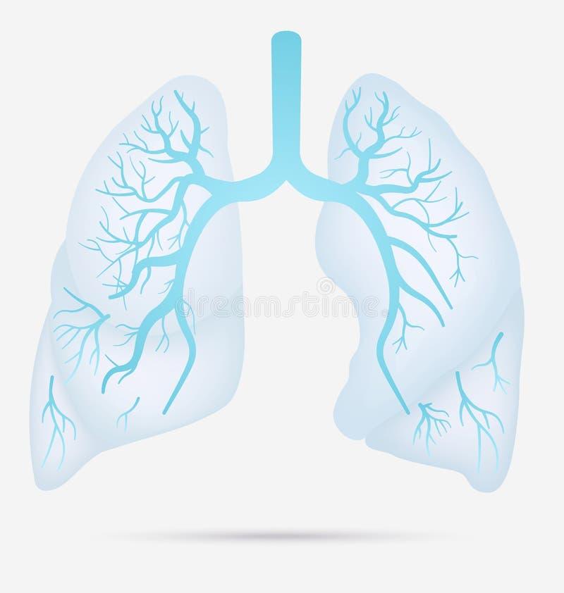 Ludzka płuco anatomia dla astmy, gruźlica, zapalenie płuc Płuco ca ilustracji