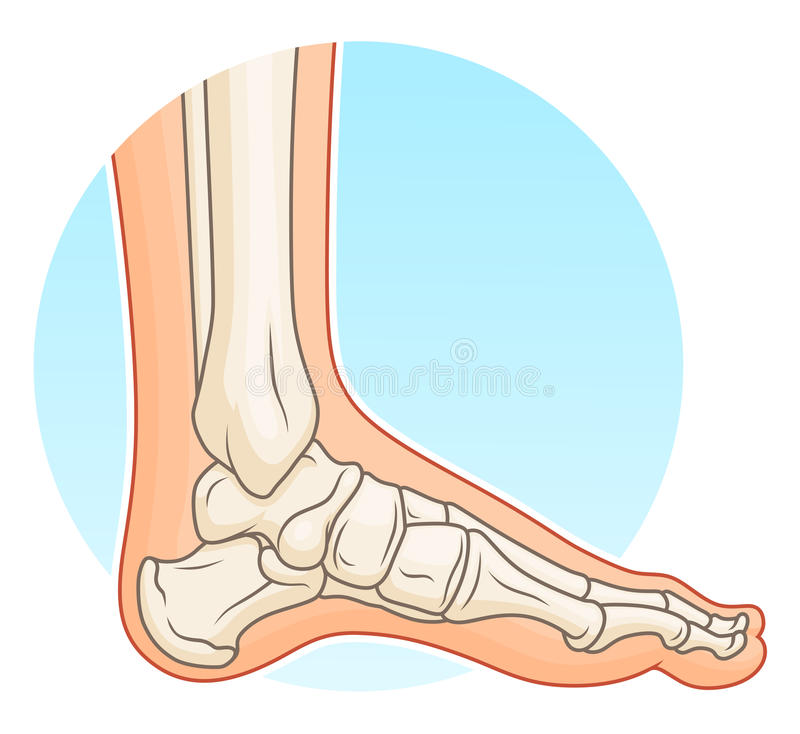 Ludzka stopa z kościami royalty ilustracja
