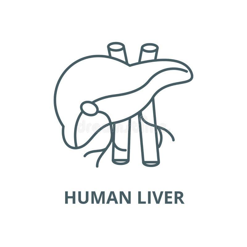 Ludzka wątrobowa wektor linii ikona, liniowy pojęcie, konturu znak, symbol ilustracji
