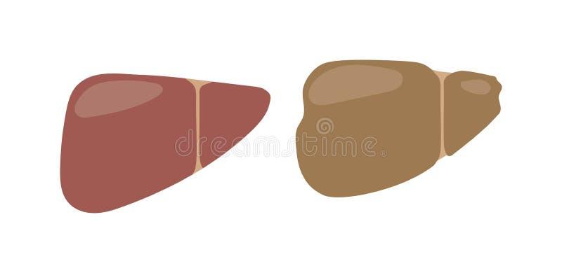 Ludzka wątrobowa wektorowa ilustracja ilustracja wektor