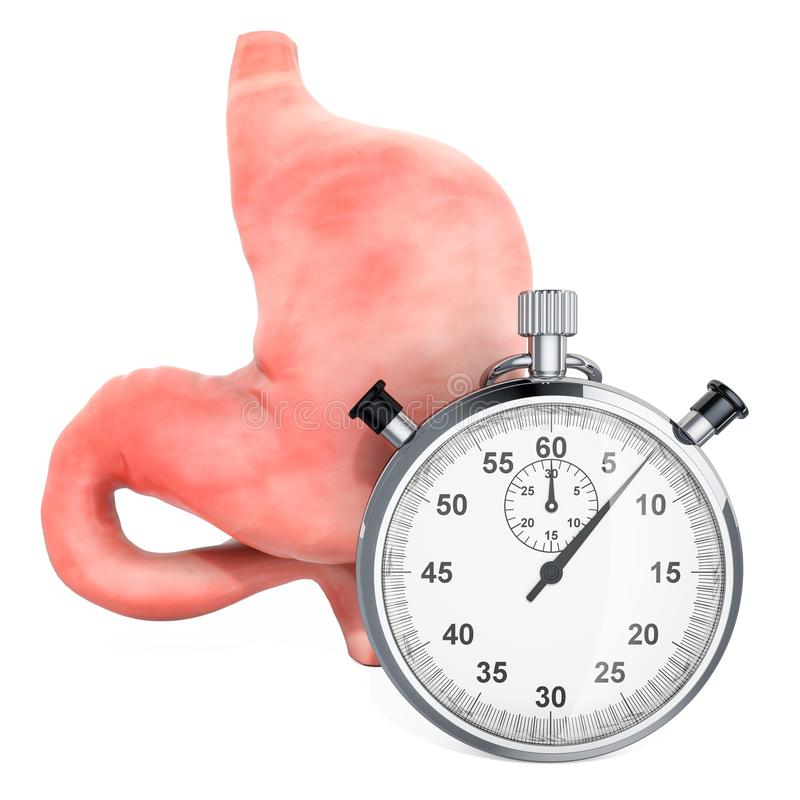Ludzki żołądek z stopwatch Pierwsza pomoc i traktowanie żołądka pojęcie, 3D rendering ilustracji