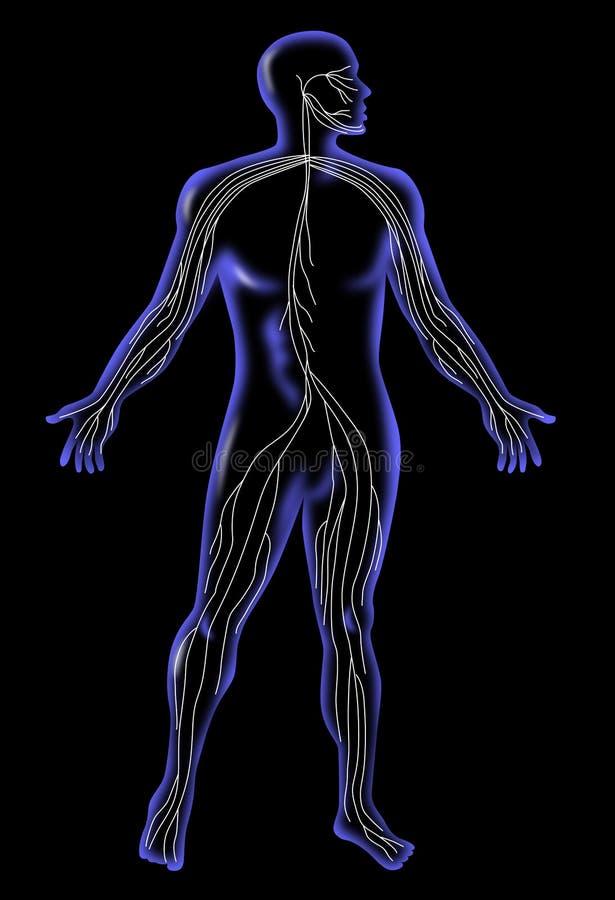 ludzki anatomia promień x ilustracja wektor
