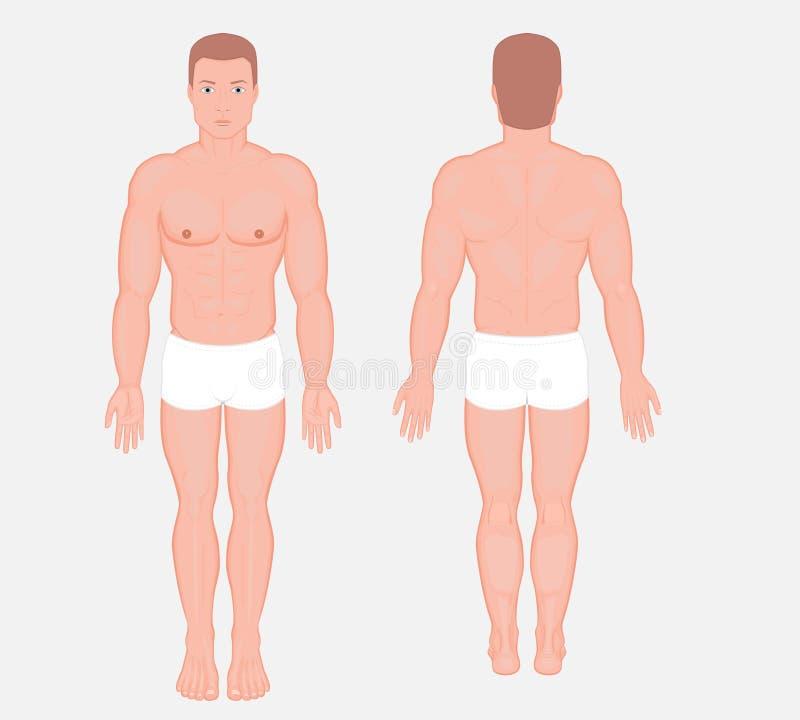Ludzki anatomy_European mężczyzna ciało ilustracja wektor