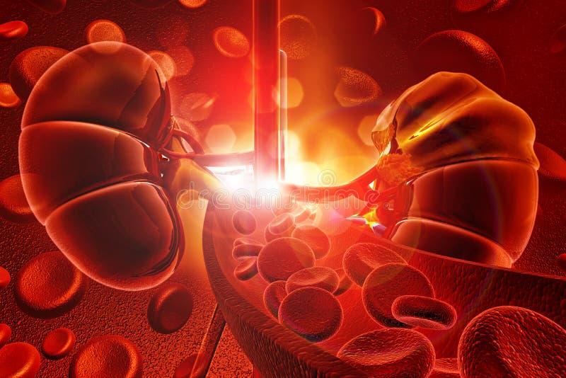 Ludzki cynaderki z komórkami krwi royalty ilustracja