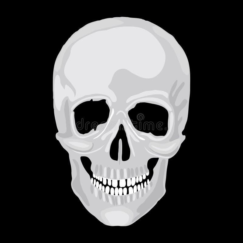 Ludzki czaszka model. royalty ilustracja