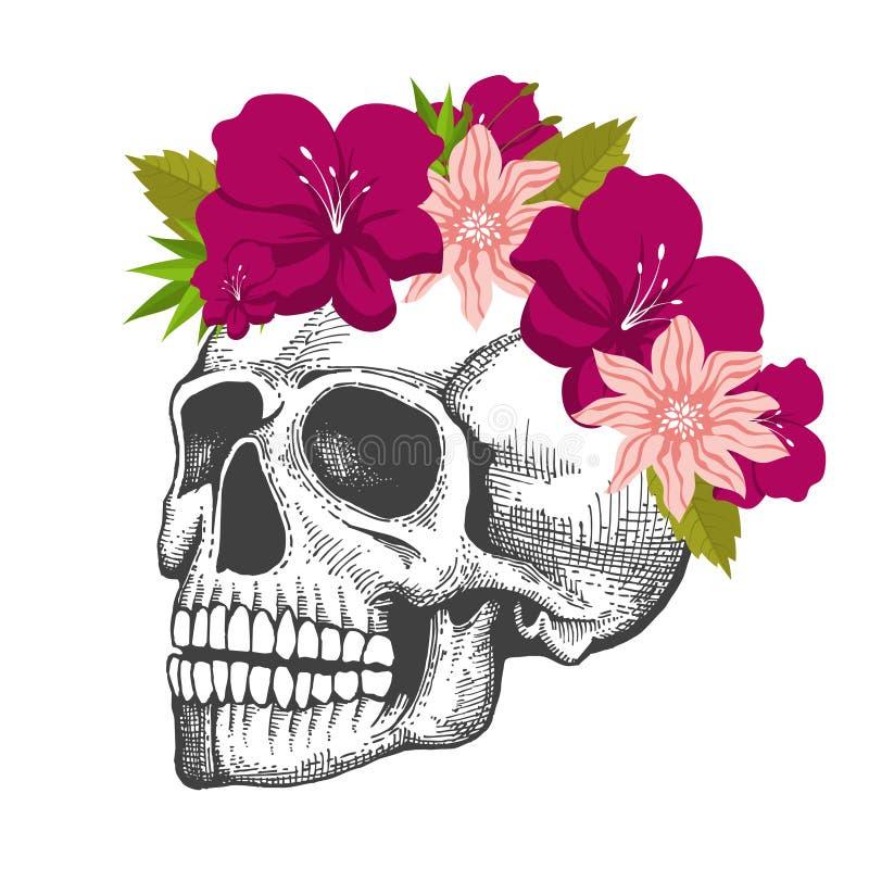 Ludzki czaszki nakreślenie z kwiecistym wiankiem odizolowywającym na białym tle ilustracja wektor