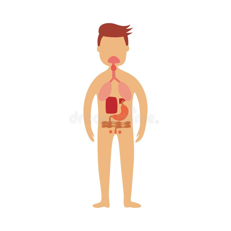 Ludzki gastrointestinal obszar - schematyczny obraz lokacja trawienne części w męskim ciele ilustracja wektor