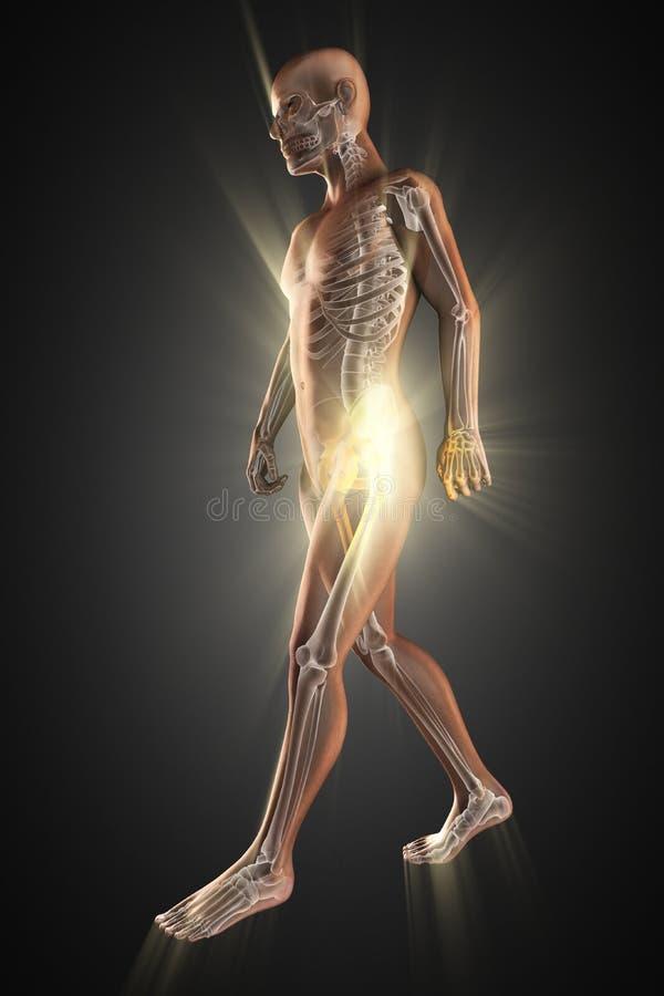 Ludzki kości prześwietlenia obrazu cyfrowego wizerunek obrazy royalty free