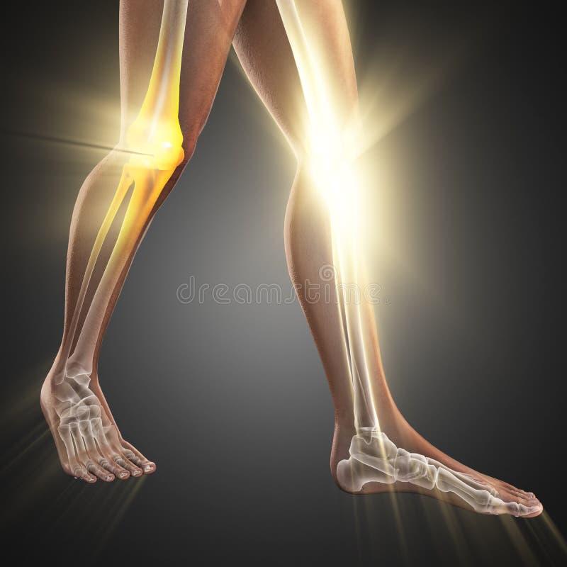 Ludzki kości prześwietlenia obrazu cyfrowego wizerunek fotografia royalty free
