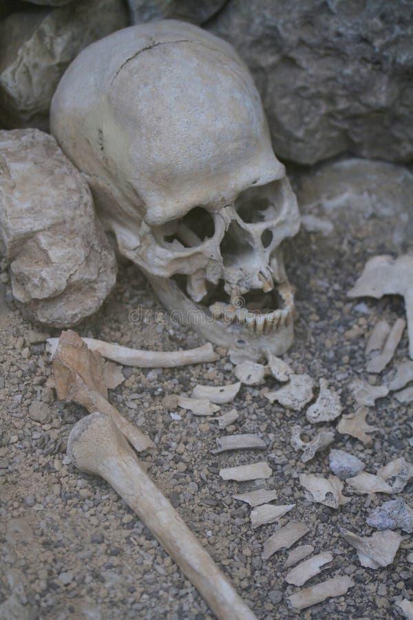Ludzki kościec od archeologicznej ekskawaci obraz stock