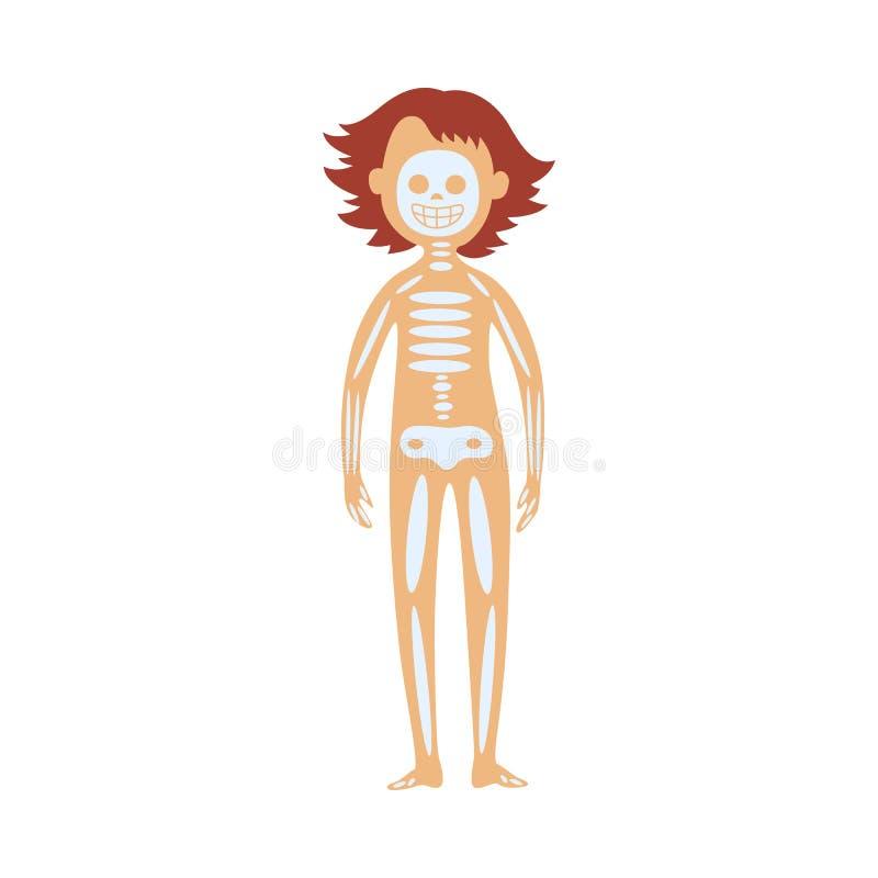 Ludzki kościec w żeńskim ciele - schematyczny wizerunek lokacja czaszka, kręgosłup i kości, ilustracji