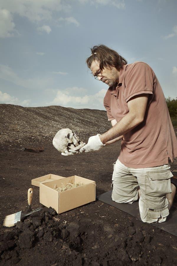 Ludzki kościec znajdujący i pakujący archeologiem na lokaci - czaszka - zdjęcia royalty free
