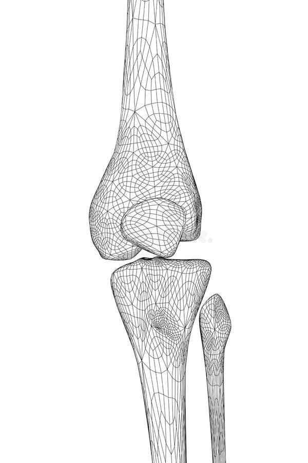 ludzki kolano royalty ilustracja