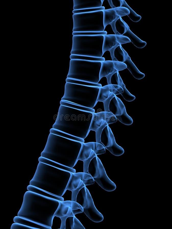 ludzki kręgosłup promieni x ilustracji