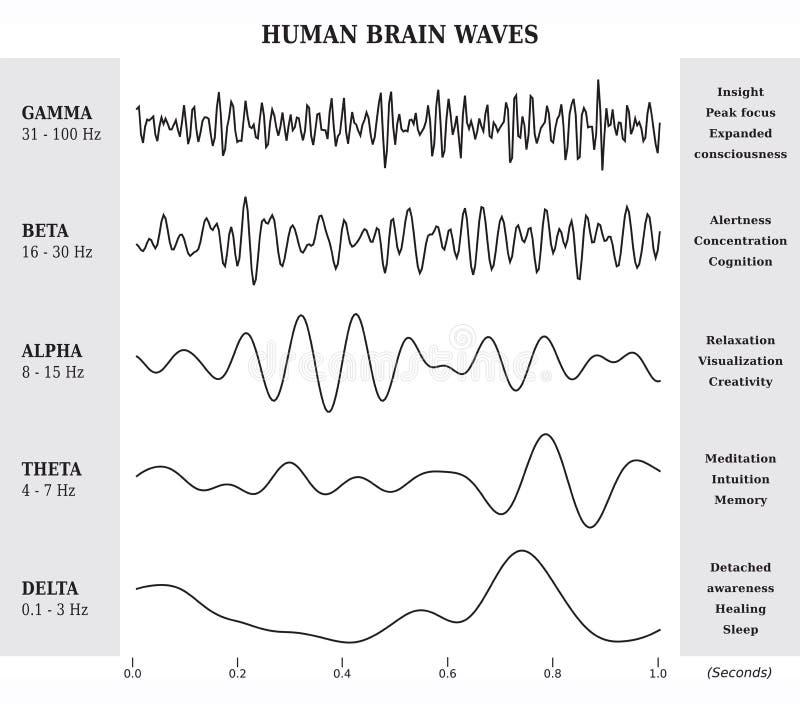 Ludzki Mózg fala diagram, mapa, ilustracja/ ilustracja wektor