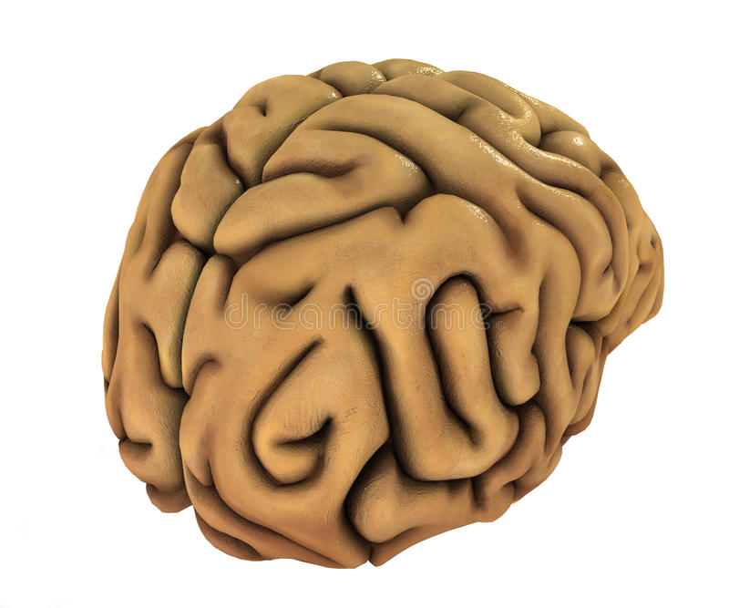 Ludzki mózg ilustracja ilustracji
