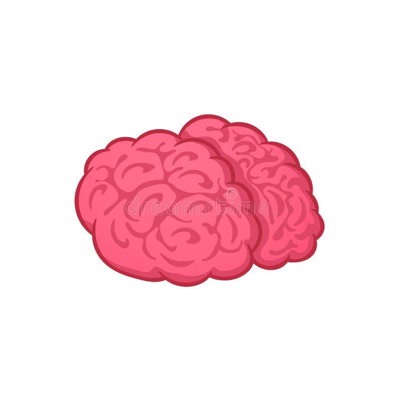Ludzki mózg na białym tle, wektorowa ilustracja, kreskówka ilustracja wektor