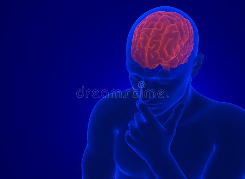 Ludzki mózg w promieniowaniu rentgenowskim Zawiera ścinek ścieżkę ilustracja wektor