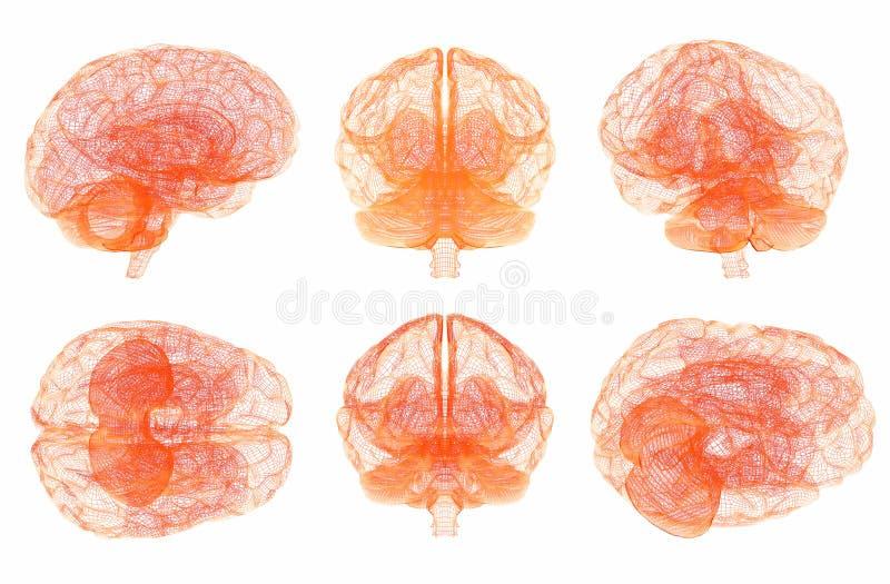 Ludzki M?zg anatomia Set wielosk?adnikowi widoki zdjęcia stock