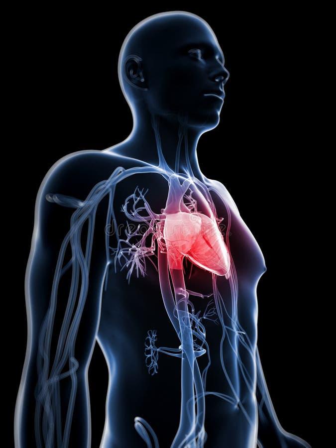 Download Ludzki naczyniasty system ilustracji. Ilustracja złożonej z ciało - 28961834