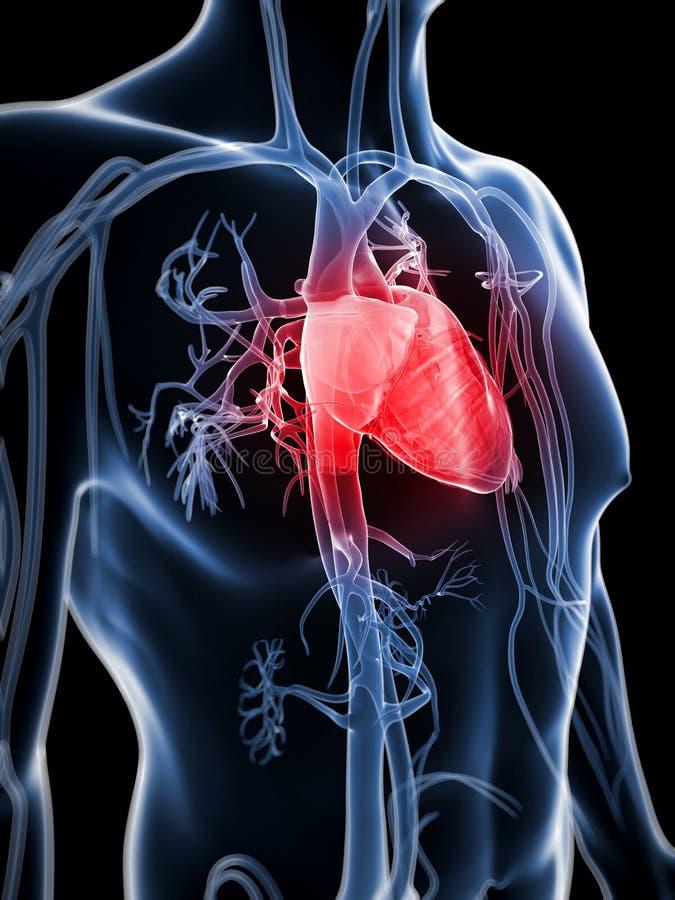 Download Ludzki naczyniasty system ilustracji. Ilustracja złożonej z heart - 28961844