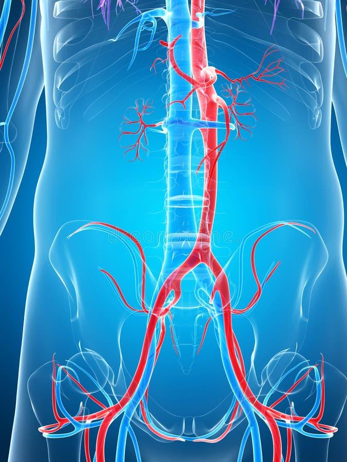 Download Ludzki naczyniasty system ilustracji. Ilustracja złożonej z biologia - 28962512