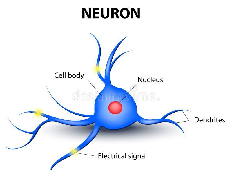 Ludzki neuron na białym tle ilustracja wektor