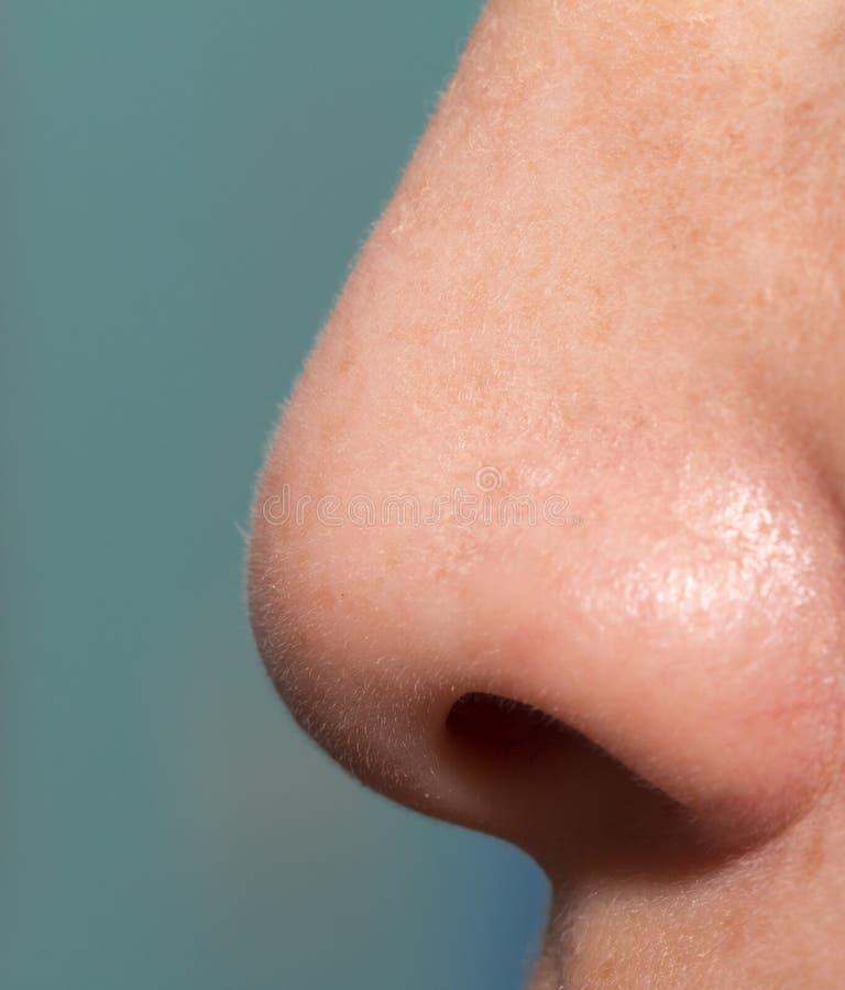 Ludzki nos zdjęcie royalty free