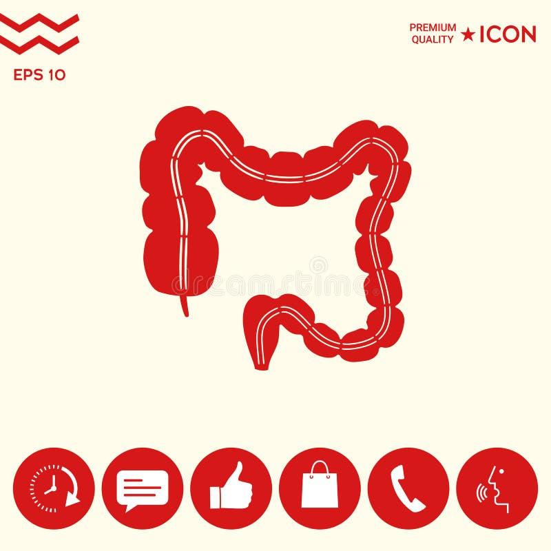 Ludzki organ - wielki jelito ilustracji