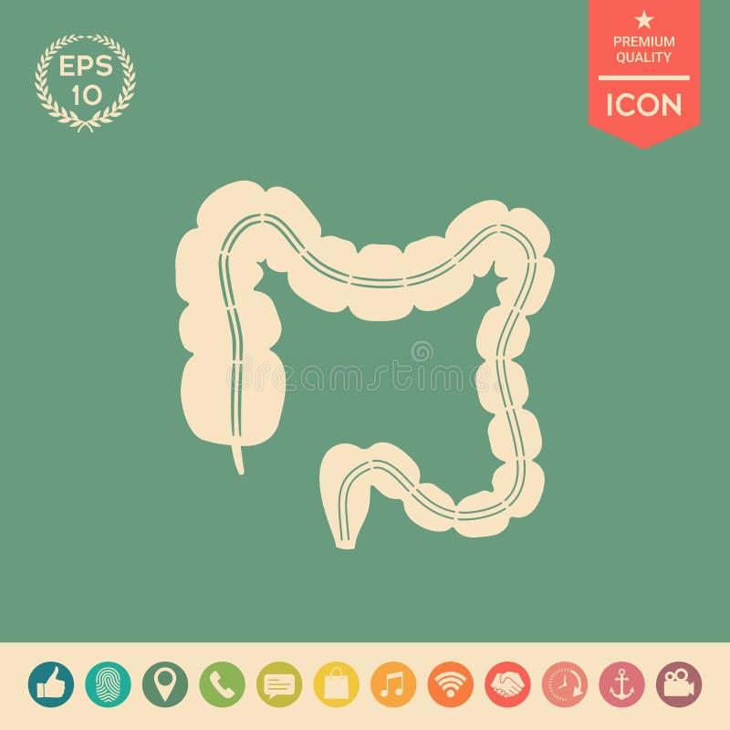 Ludzki organ - wielki jelito royalty ilustracja
