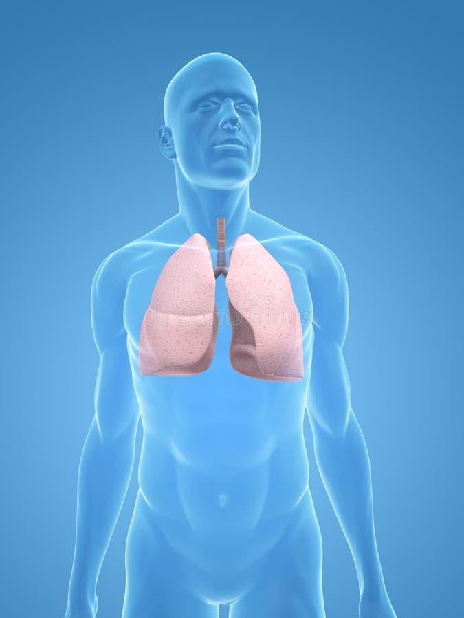 ludzki płuco royalty ilustracja