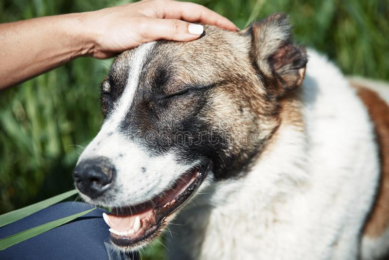 Ludzki pampering pies zdjęcia royalty free
