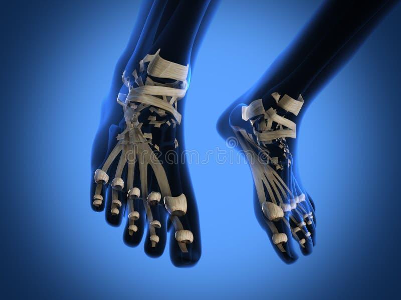 Ludzki prześwietlenia obraz cyfrowy nogi zdjęcia royalty free