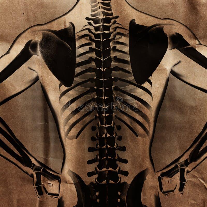 Ludzki prześwietlenie obraz cyfrowy z kościami malować zdjęcia royalty free