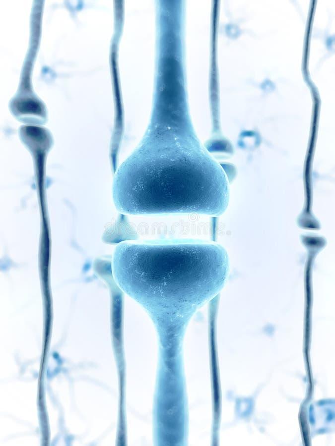 Ludzki receptor royalty ilustracja