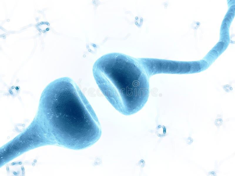 Ludzki receptor ilustracja wektor