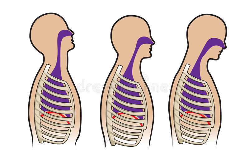 ludzki respitory system ilustracja wektor