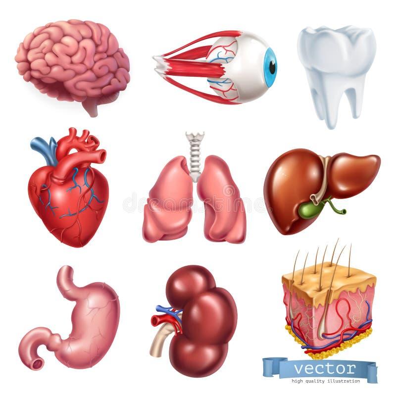 Ludzki serce, mózg, oko, ząb, płuca, wątróbka, żołądek, cynaderki, skóra 3d ikony wektorowy set royalty ilustracja