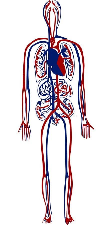 ludzki system krew. ilustracji