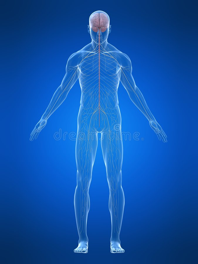 ludzki system nerwowy ilustracji