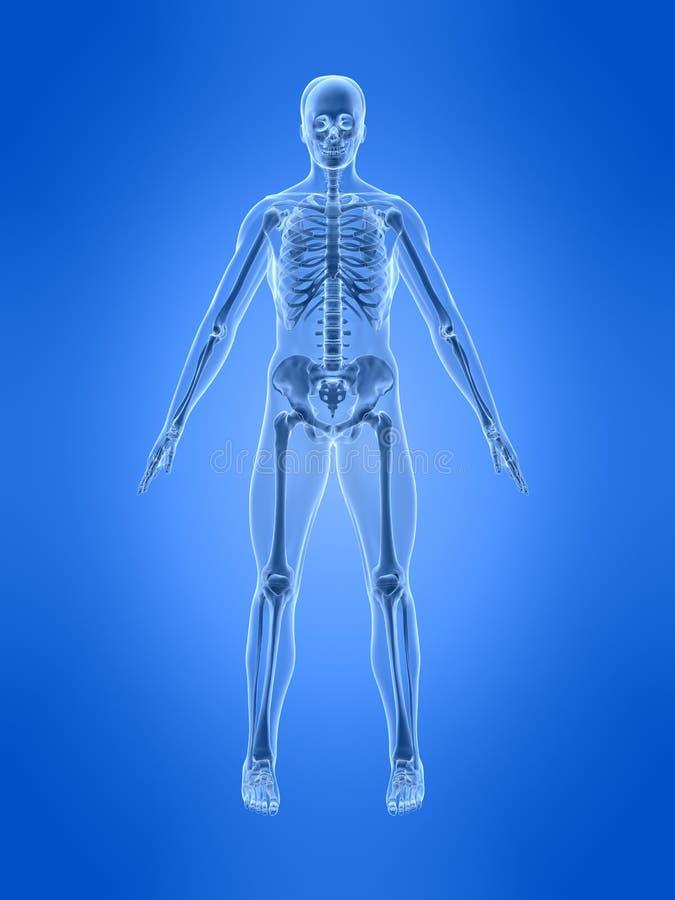 ludzki szkielet royalty ilustracja