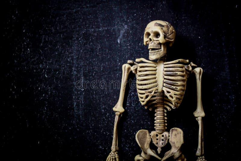 ludzki szkielet obraz stock