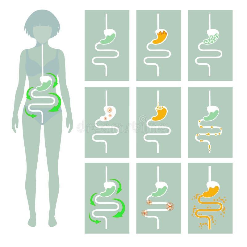 Ludzki trawienny system, royalty ilustracja