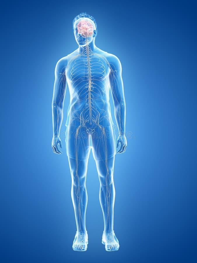 Ludzki układ nerwowy ilustracji