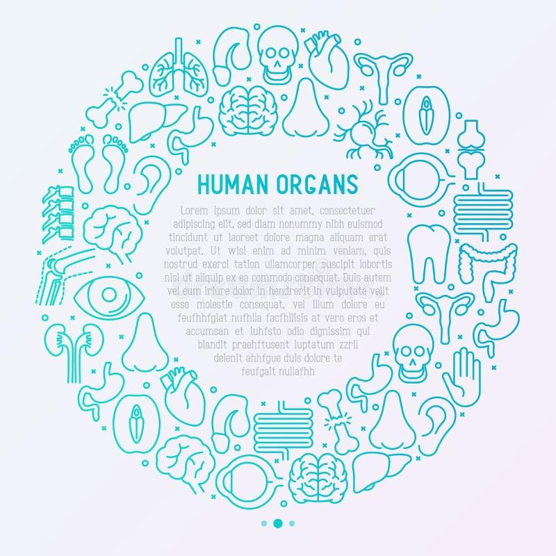 Ludzki wewnętrznych organów pojęcie w okręgu ilustracja wektor