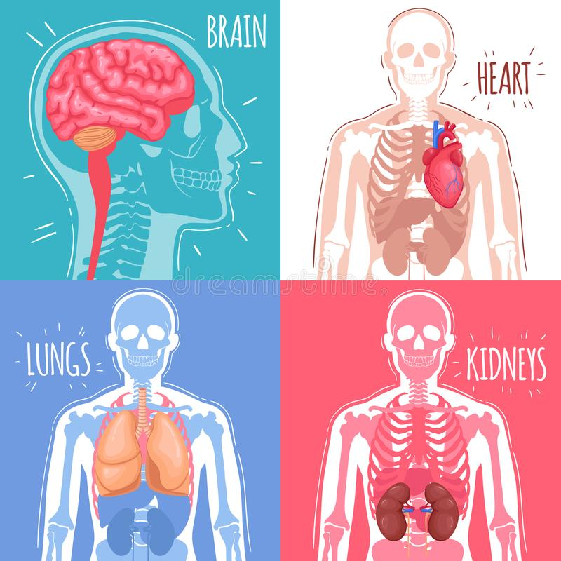 Ludzki Wewnętrznych organów projekta pojęcie royalty ilustracja